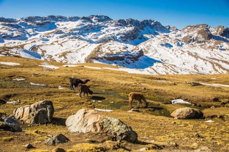 Tunari Peak tour